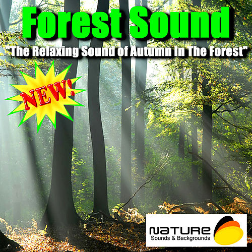 Forest Sound - The Relaxing Sound Of Autumn In The    by Nature