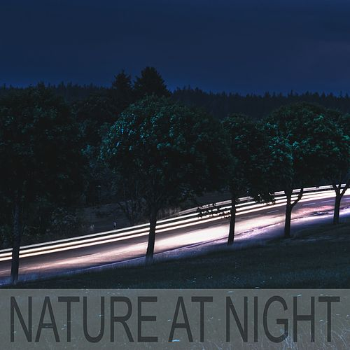 Nature at Night by Nature Sounds (1)