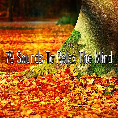 79 Sounds to Relax the Mind von Massage Therapy Music