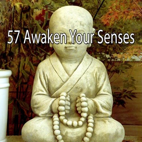 57 Awaken Your Senses von Study Concentration