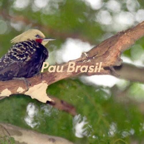 Pau Brasil de Enoch Light