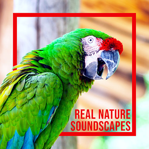 Real Nature Soundscapes de Nature Sound Collection