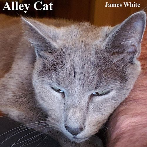 Alley Cat by James Chance And The Contortions