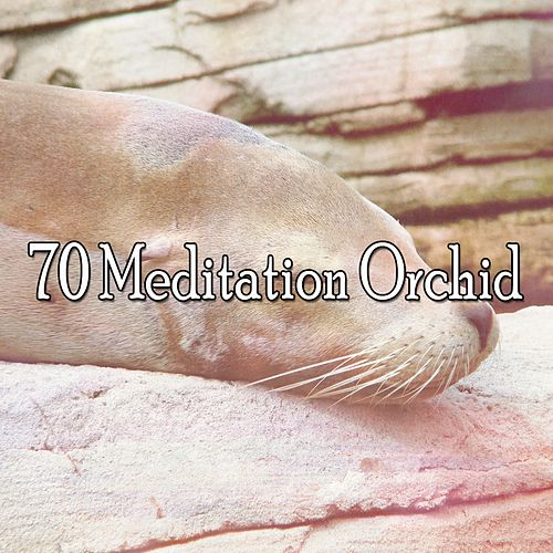 70 Meditation Orchid by Sounds Of Nature