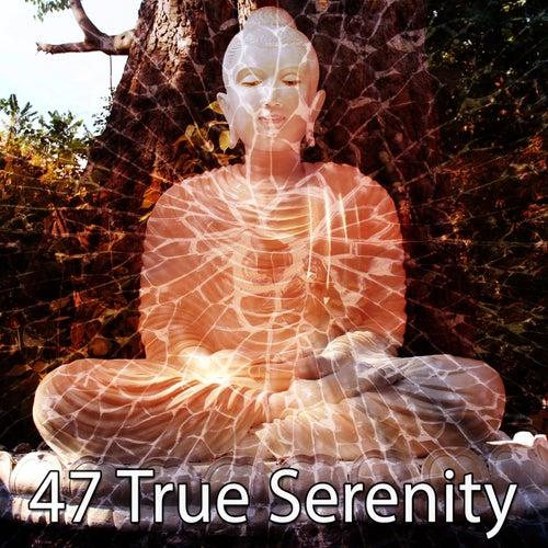 47 True Serenity von Massage Therapy Music