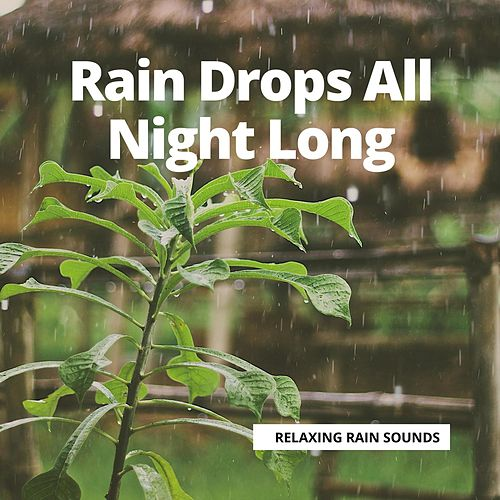 Rain Drops All Night Long by Nature Sounds (1)