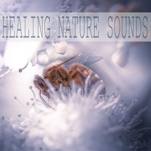 Healing Nature Sounds de Sounds Of Nature