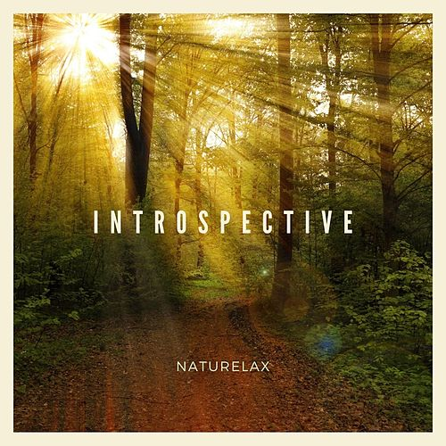 Introspective by Naturelax