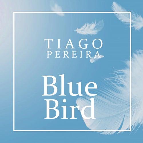 Blue Bird by Tiago Pereira