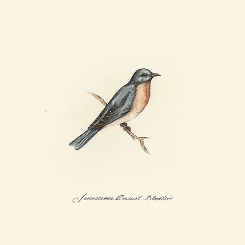 Bluebird de Jamestown Revival