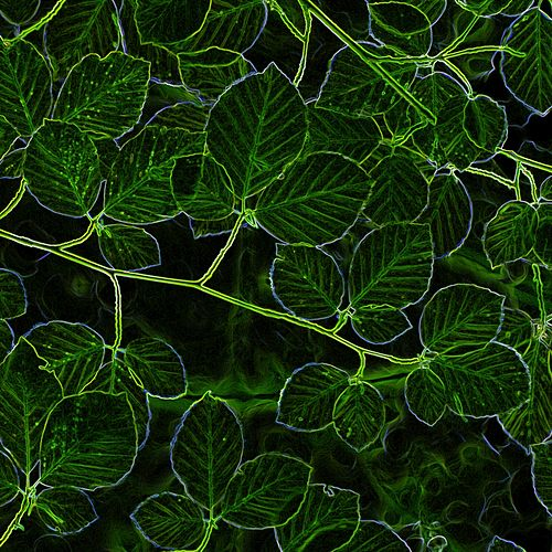 Green Wood von Thelonious Monk