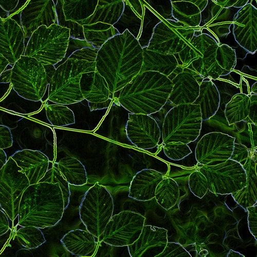 Green Wood von Gilbert Becaud