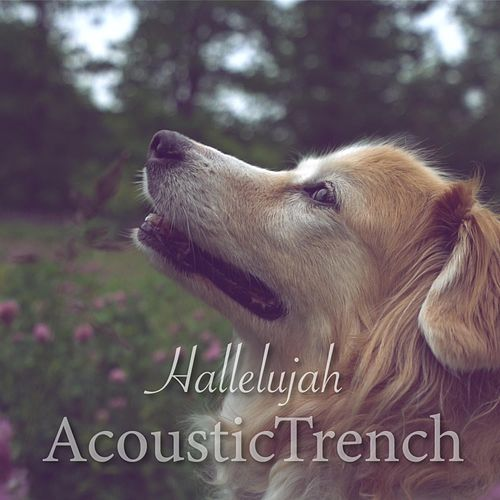 Hallelujah by AcousticTrench