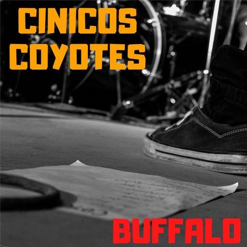 BUFFALO (En Vivo) de Cinicos Coyotes