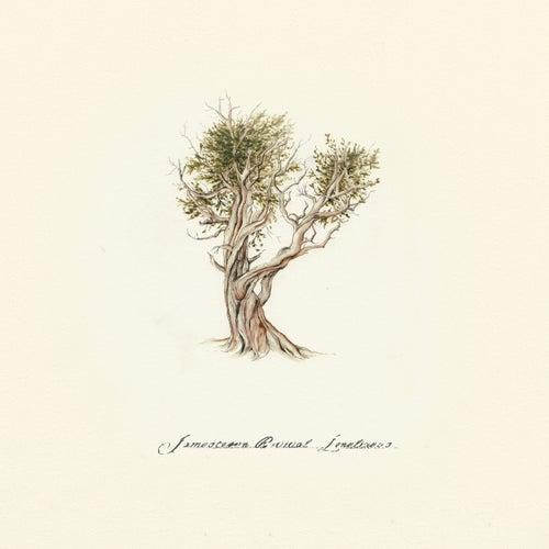 Loneliness de Jamestown Revival