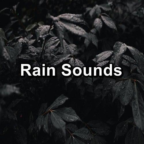 Rain Sounds by Raindrops Sleep