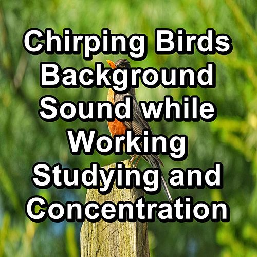 Chirping Birds  Background Sound while Working Studying and Concentration by Spa Relax Music