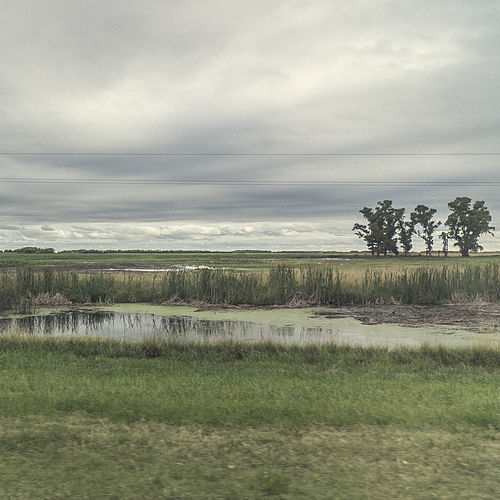 Down In The Pampa de Pampas