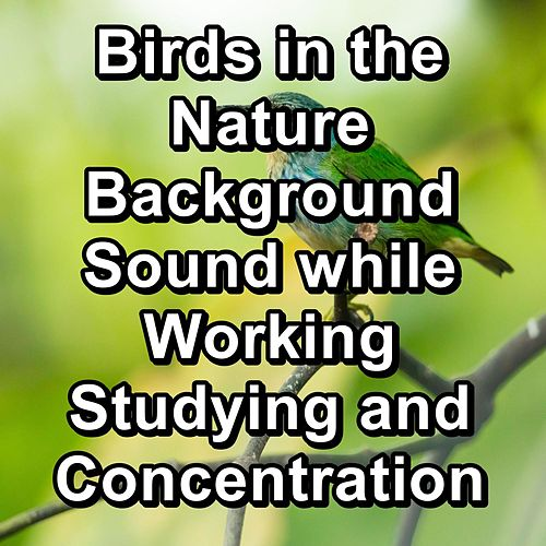 Birds in the Nature Background Sound while Working Studying and Concentration by Nature Bird Sounds