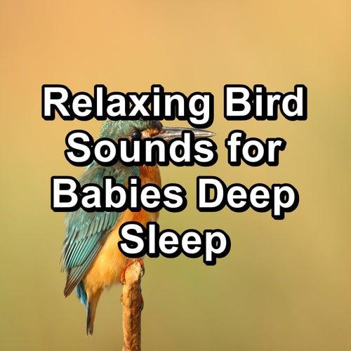 Relaxing Bird Sounds for Babies Deep Sleep by Nature Bird Sounds