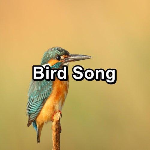 Bird Song von Yoga