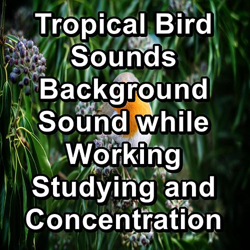 Tropical Bird Sounds Background Sound while Working Studying and Concentration von Yogamaster