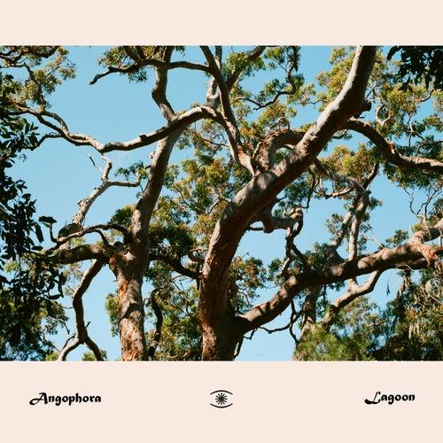 Lagoon by Angophora