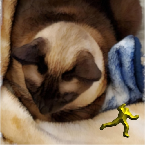 Interjection by a Siamese Cat by Dude in the Sky