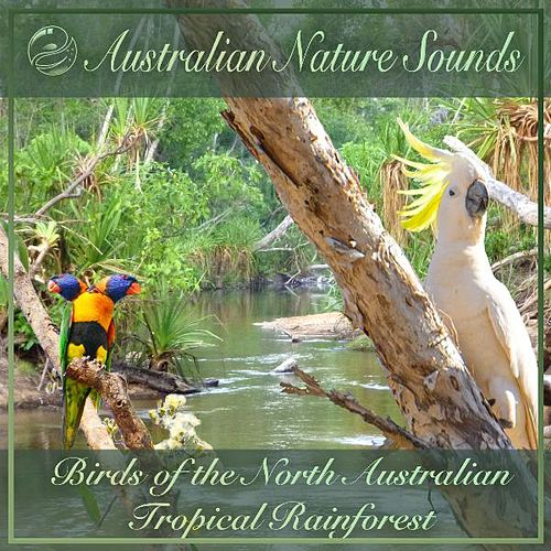Birds of the North Australian Tropical Rainforest by