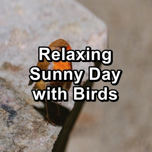 Relaxing Sunny Day with Birds by Spa Relax Music