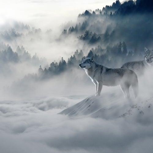 Enlivening Songs | Serenity von Rain Sounds