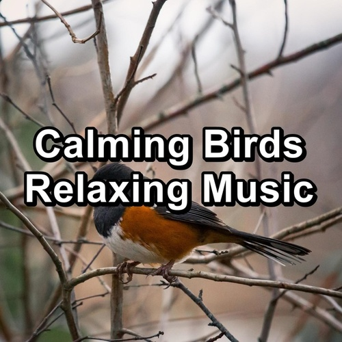 Calming Birds Relaxing Music by Spa Relax Music