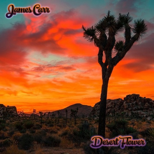 Desert Flower by James Carr