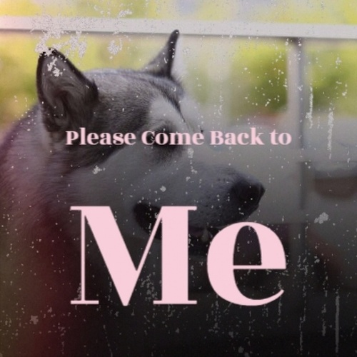 Please Come Back to Me by Various Artists