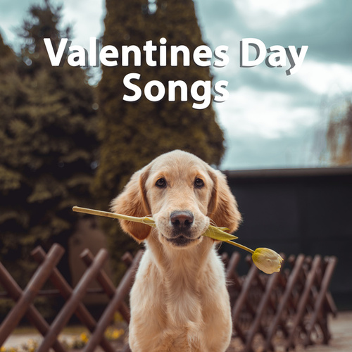 Valentines Day Songs by Various Artists