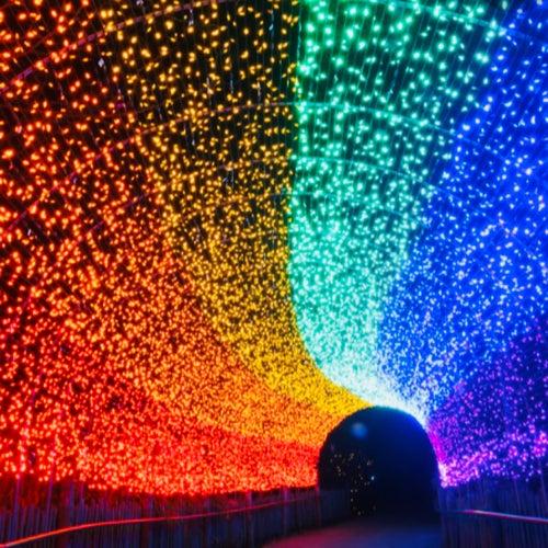 Lights by S.I.G Boy Bean