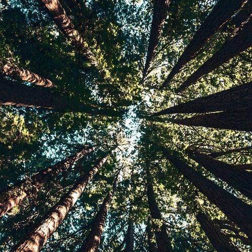 Power Trees by Roberto Carlos