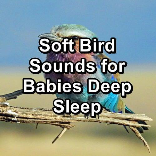Soft Bird Sounds for Babies Deep Sleep by Spa Music (1)