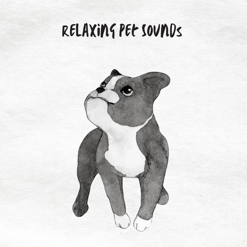 Relaxing Pet Sounds by Pet Music Therapy