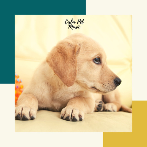 Calm Pet Music by Pet Music Therapy