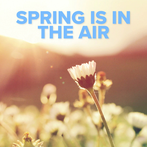 Spring Is In The Air by Various Artists