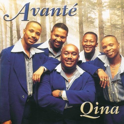 Qina by Avante