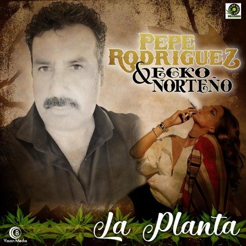 La Planta by Pepe Rodriguez