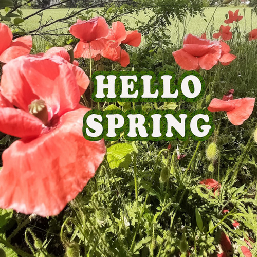 Hello Spring by Various Artists