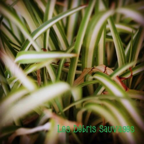 Les Débris Sauvages by Les Débris Sauvages