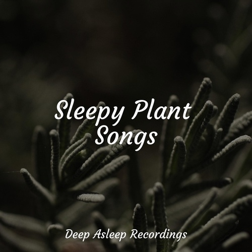 Sleepy Plant Songs de Ambient Music Therapy