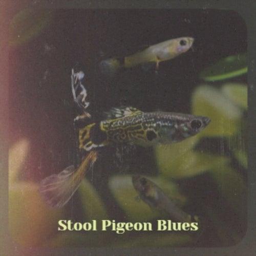 Stool Pigeon Blues von Various Artists
