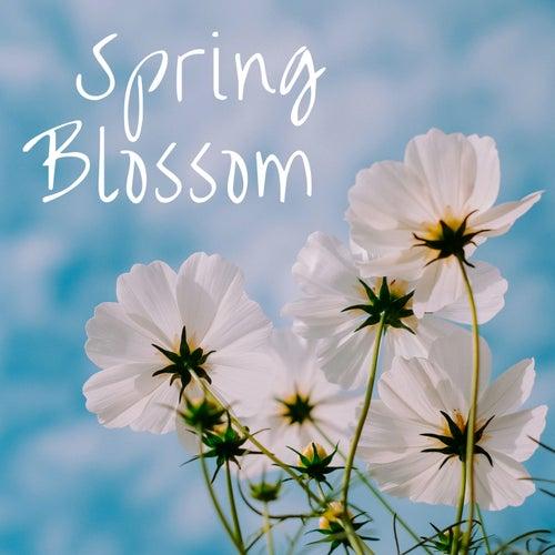 Spring Blossom von Various Artists