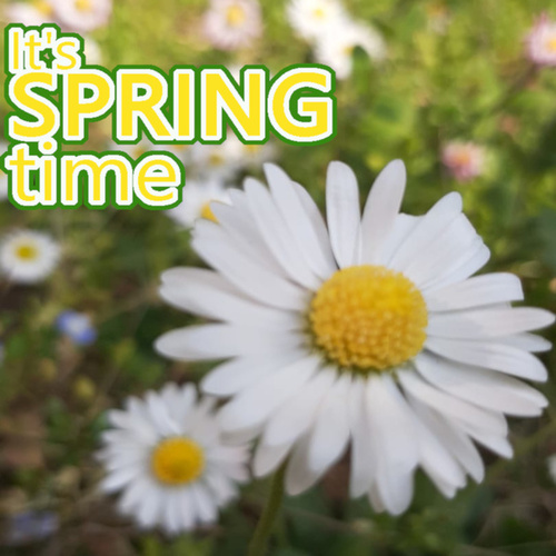 It's Spring time by Various Artists