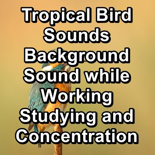 Tropical Bird Sounds Background Sound while Working Studying and Concentration by Spa Relax Music